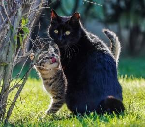 Community Cats Alive (Wilson, NY)